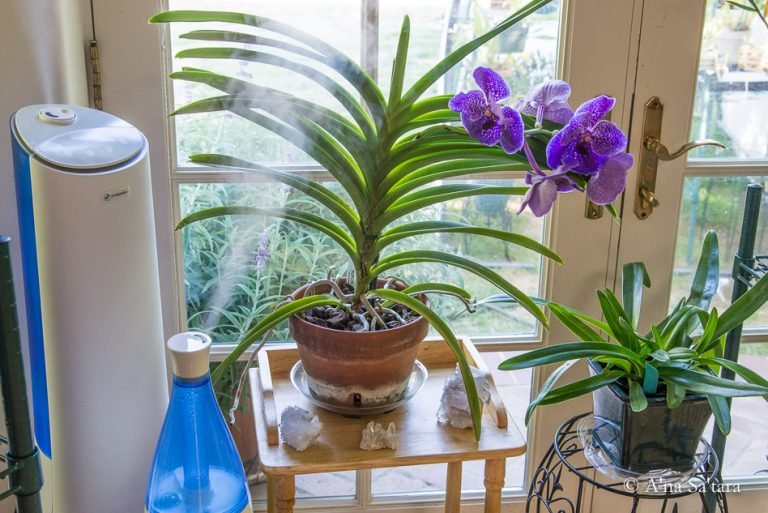 Are Mist Humidifiers Good for My Plants?