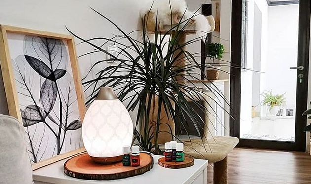 Best Humidifier For House Plants
